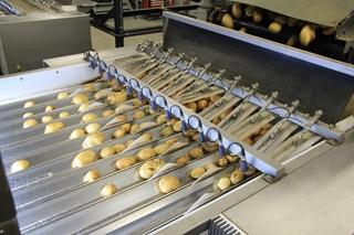 Tijdens het optische sorteerproces worden aardappelen met zichtbare gebreken verwijderd. Tegelijk sorteert het systeem de aardappelen op basis van hun kaliber.