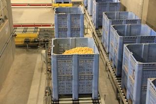 Intrion voorzag een centraal transport om de palletboxen met aardappelen naar de magazijnbuffer te brengen. Dat automatische magazijn kan in totaal 600 palletboxen opslaan, die elk maximaal 700 kilo aardappelen bevatten.